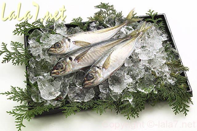 背の青い魚 鮮魚