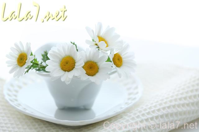 白いお皿の花瓶にさしたマーガレットの花
