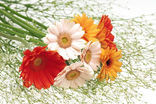 ガーベラの花束 かすみ草