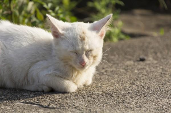 眠っている小柄な薄い茶色の猫