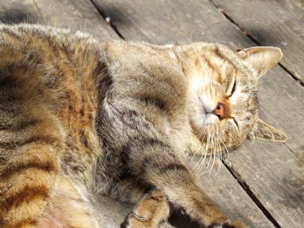 ベンチに眠っている三毛猫