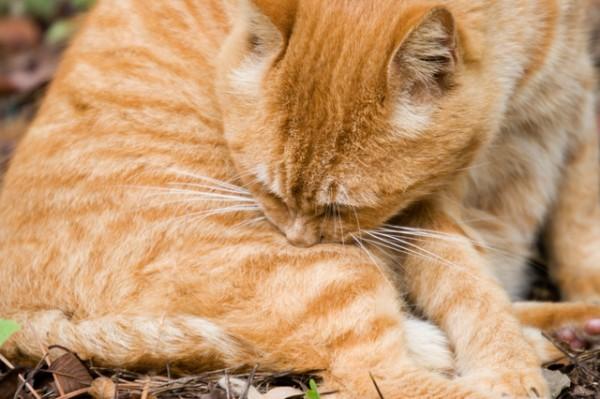 身体を丸めて眠っている薄茶色の猫