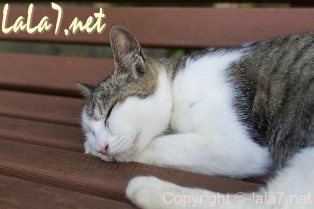 猫 ねこ ネコ ベンチで眠ている