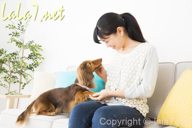 座っている女性と犬 ペット 顔を見合わせている