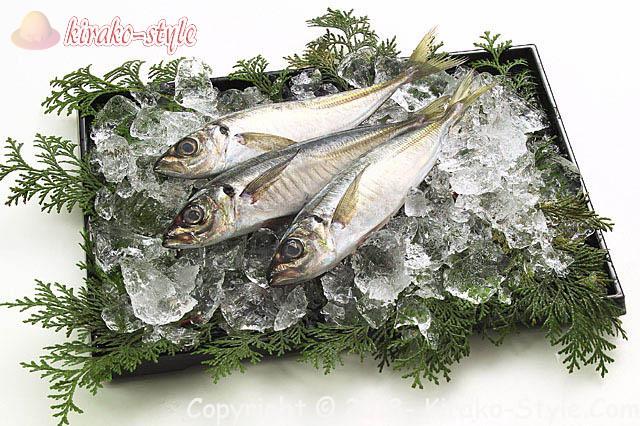 脳梗塞の予防になる食べ物が青魚なのは!善玉の質をあげるから!アジの画像