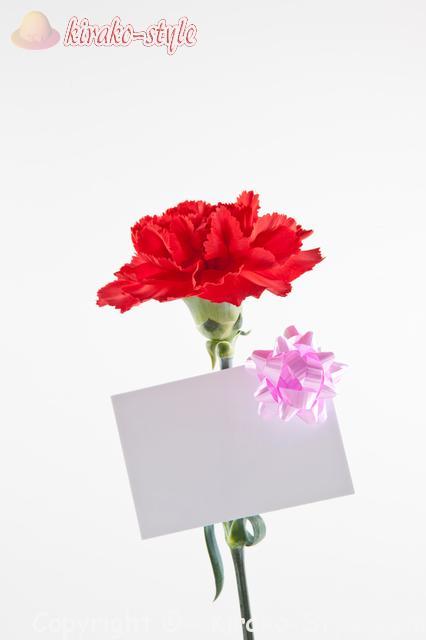 一輪のカーネーションと白いメッセージカード