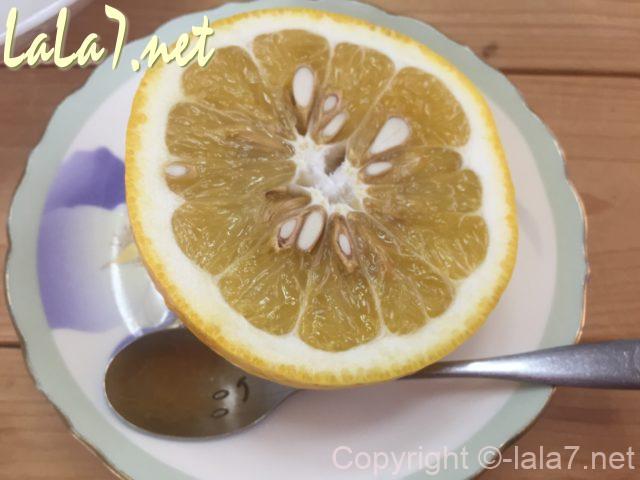 河内晩柑(ジューシーオレンジ・美生柑)食べ方・輪切りにしてスプーンで