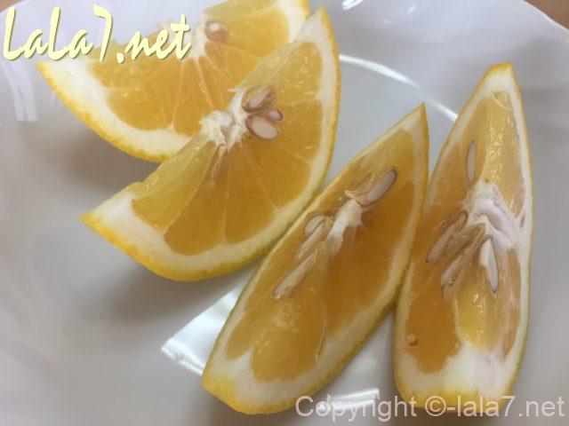 河内晩柑(ジューシーオレンジ・美生柑)食べ方・輪切りにしてくし型
