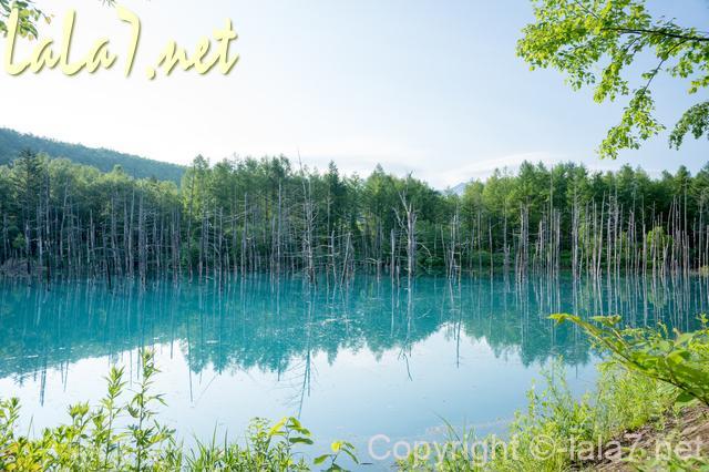 景色、池と森と空の素晴らし景観