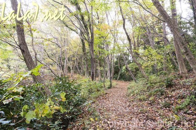 森 枯葉 小路