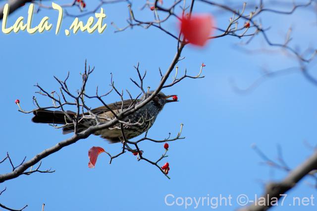 鳥が木の実をくわえている 秋冬